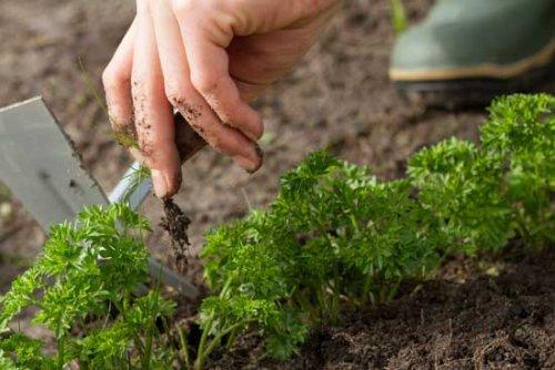 удаление сорняков с грядки