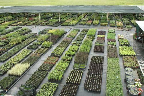 выращивание овощной рассады
