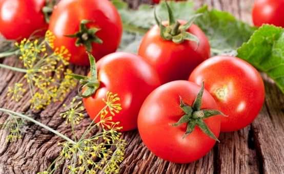 выращивание помидоров в домашних условиях