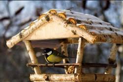 польза птиц
