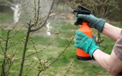 защита растительности