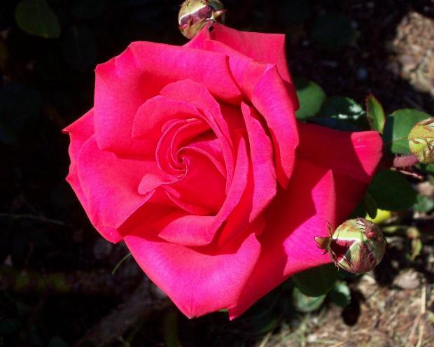 яркий цветок крупным планом