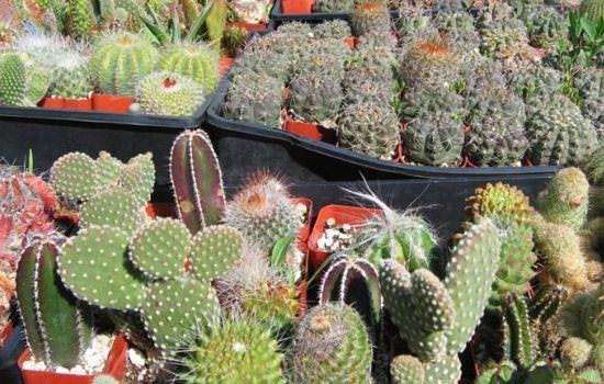 растения на солнечном свете