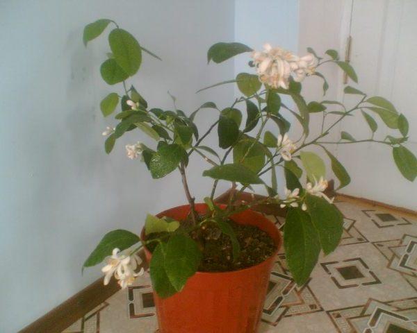 удаление лишнего цветения