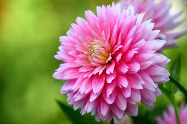 цветок на зелёном фоне