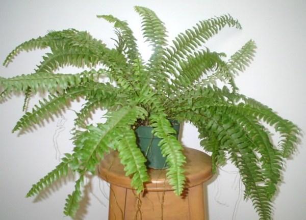 комнатное растение в горшке