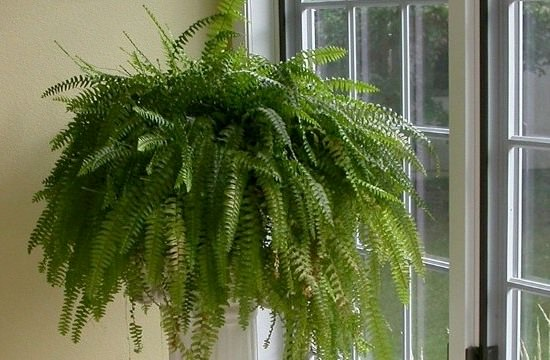комнатное растение у окна