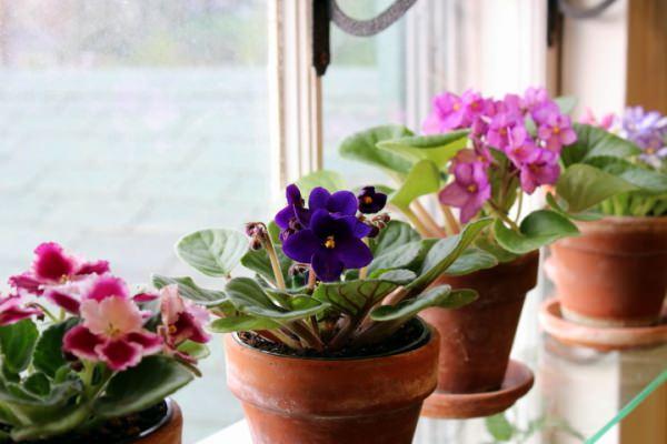 три цветка на окне