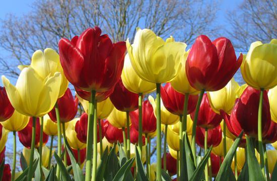 красно желтые цветы