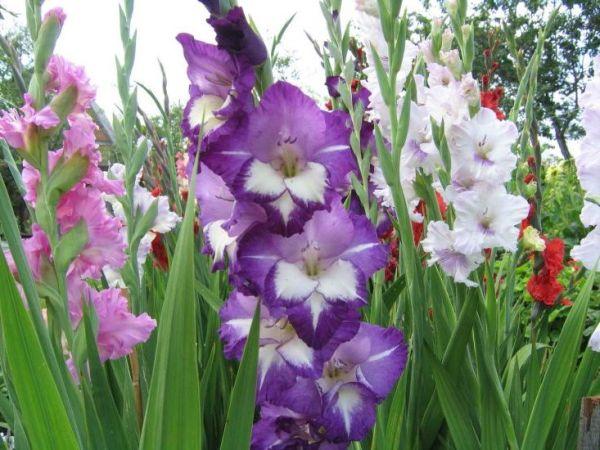 пёстрые цветы