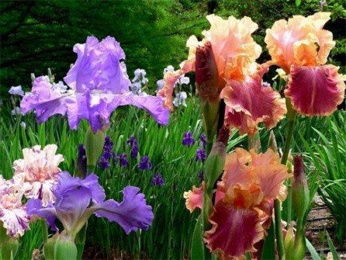 розовые и сиреневые цветы