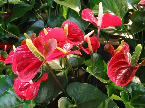 растение для очистки врздуха