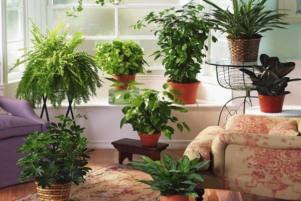 разнообразие цветов в квартире