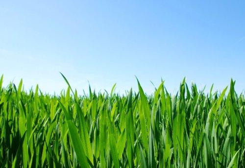 зелёная ухоженная лужайка