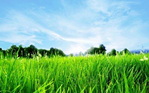 голубое небо над зелёной лужайкой