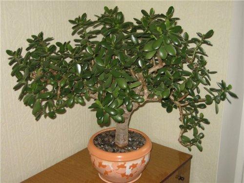 комнатное растение в углу