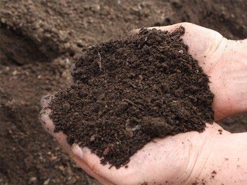 чернозём для посева травы