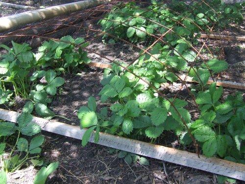 земля под выращивание ягод