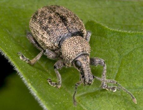 жук на зелёном листе