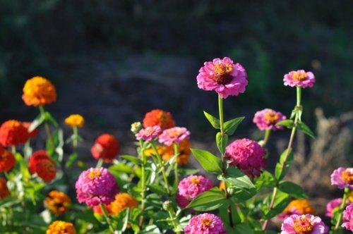 цветы на хорошо освещённом месте в саду