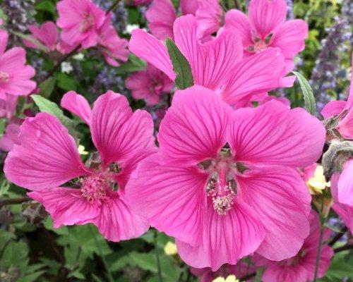 цветы хотьмы