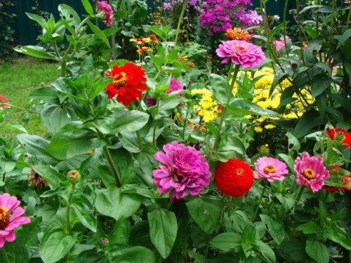 красные и фиолетовые цветки