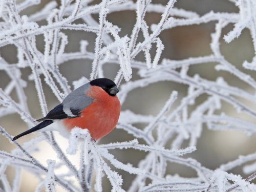 птица на фоне веток
