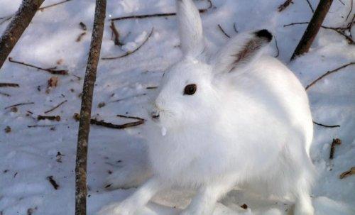 грызуны вредят саду зимой