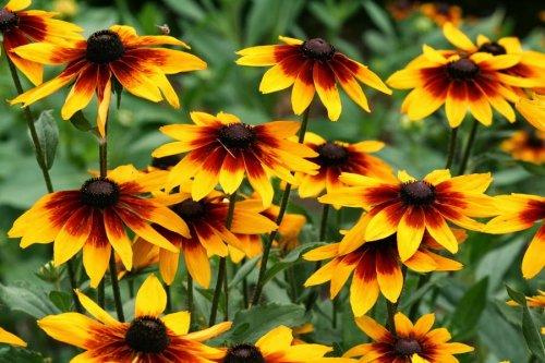 яркие густые цветы