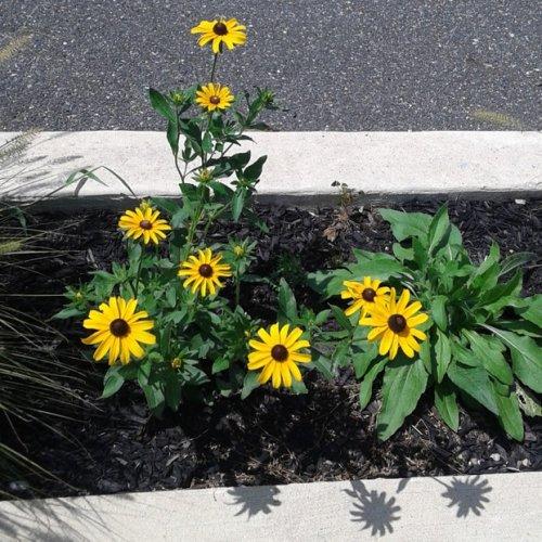 отдельно растущий цветок