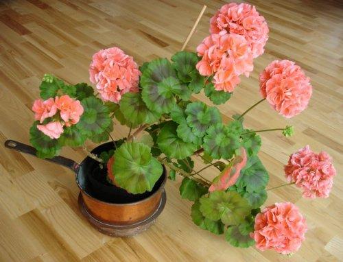 розовое цветение