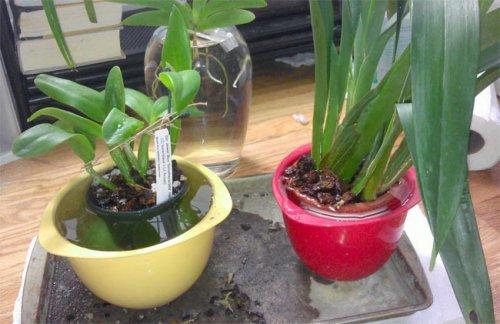 горшок с растением в воде