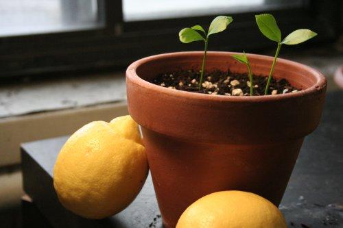 глиняная ёмкость для растения