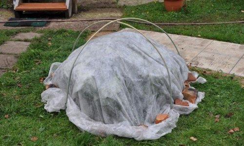 укрытие для растения на зиму