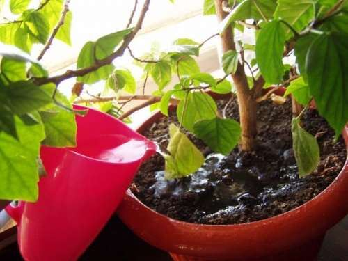 увлажнение почвы под растением