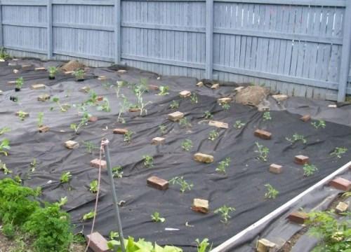 выращивание помидоров с использованием агроволокна