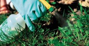 гербицид распыляется на поверхность растения