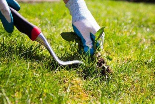 в борьбе с растительностью используйте специальный инструмент