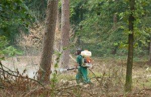 внесение химикатов в землю под деревом