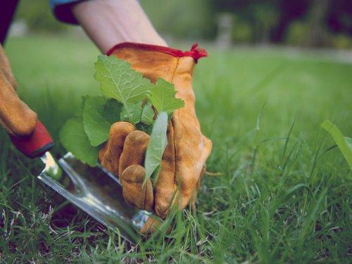 сорняки можно уничтожать выдёргивая руками