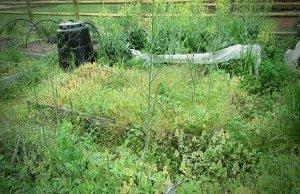 густые заросли сорных трав